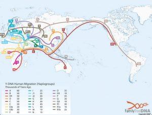 haplogrupuri